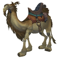 Tan Riding Camel
