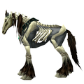Unsaddled Grey Skeletal Horse